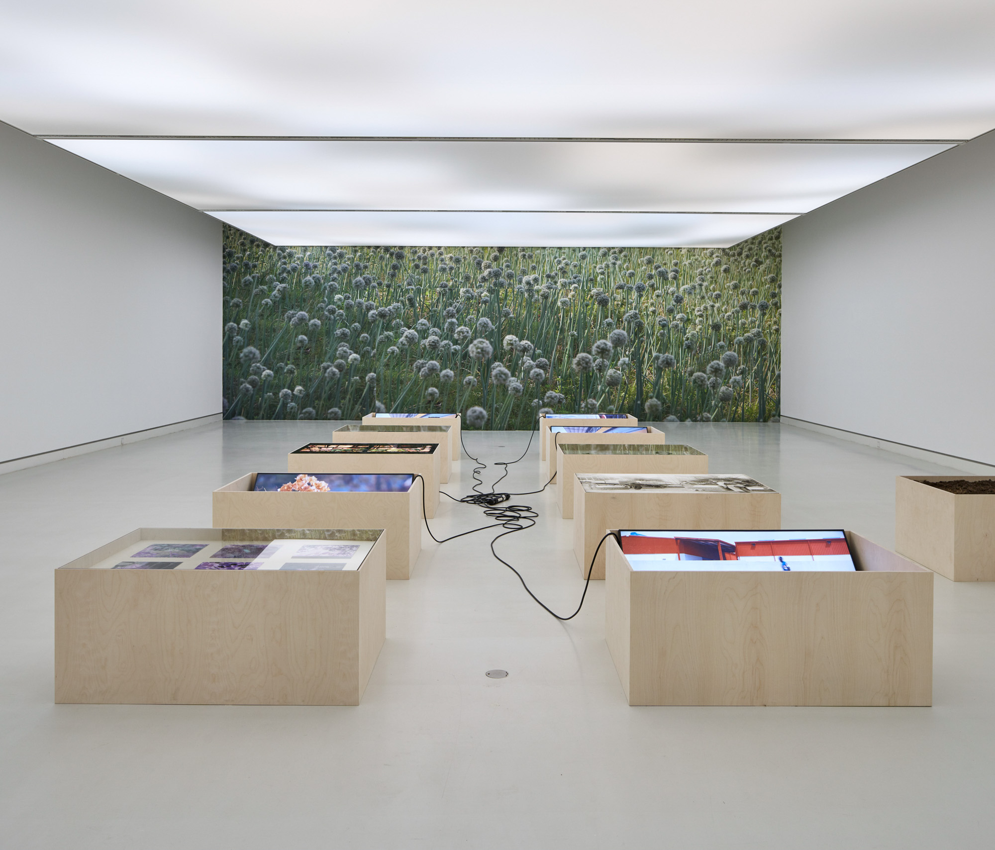 Conversing with Leaves at Kunsthalle Mainz